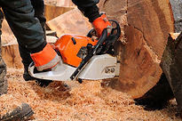 tree surgeon basingstoke, tree surgeon hampshire, tree surgeon berkshire, tree surgery basingstoke, tree surgery hampshire, tree surgery berkshire, tree removal basingstoke, tree removal hampshire, tree removal berkshire, stump removal basingstoke
