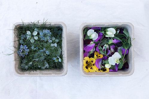 Edible Flower Punnet