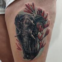 Elephant & Harakeke flower