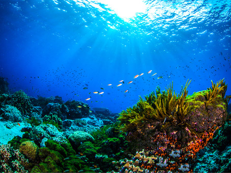 Australian News Journal: Ancient Civilization at Bottom of the Coral Sea?