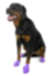 Sticky Pawz, rubber dog sock, paw protection