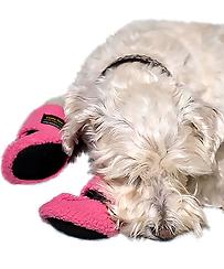 Cushy Paw Slippers, dog slipper, dog indoor shoes