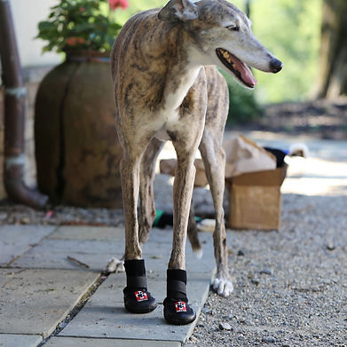About Thera-Paw, greyhound, dog boots