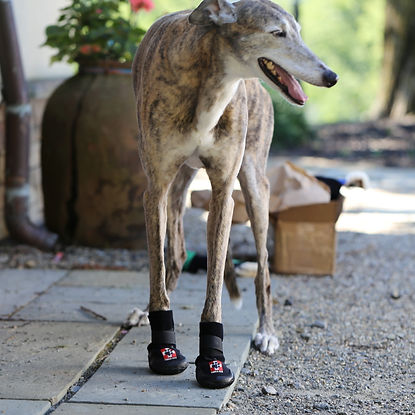 About Thera-Paw, greyhound, dog boots