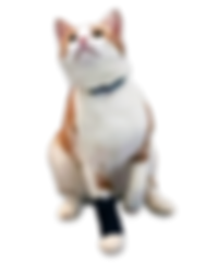 Carpo-Flex Mini, cat leg brace support
