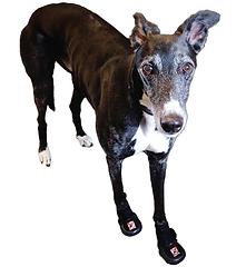 Thera-Paw Boot, dog shoe, dog boot