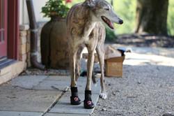 Thera-Paw Boots