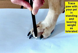 paw tracing, paw measurement