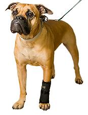 Carpo-Flex-X, dog leg brace support, pet leg injury support