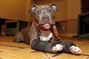 Carpo-Flex X, dog brace support, carpoflex