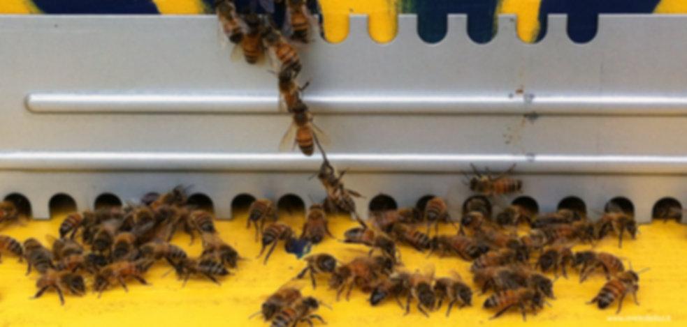 api in catena per costruire struttura