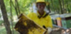 Apicultore al lavoro, estrazione di favo coperto di api
