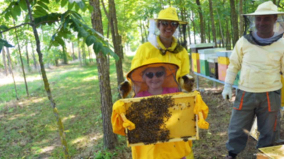 apicultore, arnia, alveare, predellino di volo