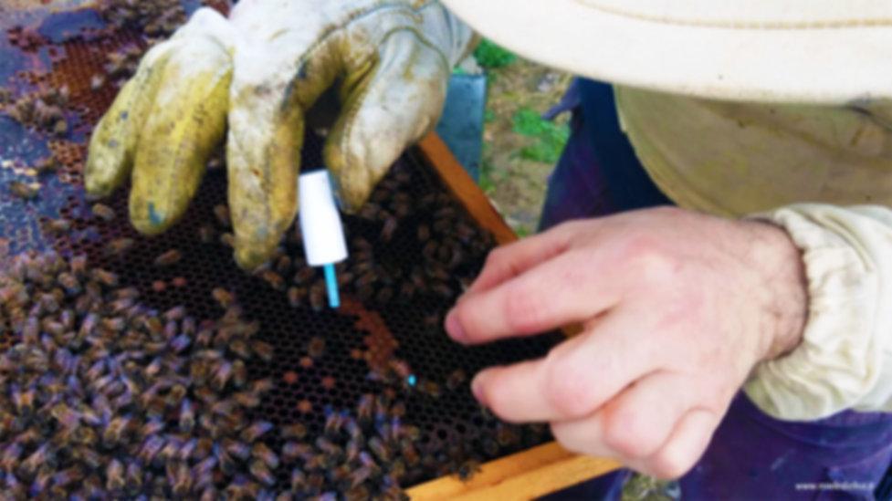 Operazioni di estrazione del miele dai favi