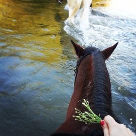 Horseback riding in the Verde River.jpe