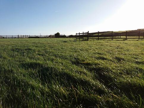 Pitches at Treveague Farm Campsite