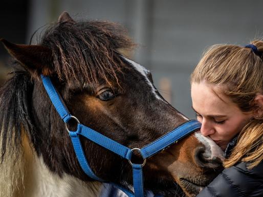 Novita Biotechnology & Regenesis Vet lends a helping hoof to Cart Horses