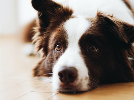 10 THINGS ANIMALS TAUGHT ME ABOUT… GRIEF