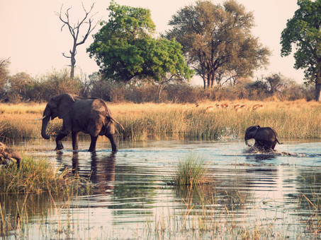 TRAVEL: WildEarth SafariLIVE (Game Reserves Are Bringing the Bush to Us)