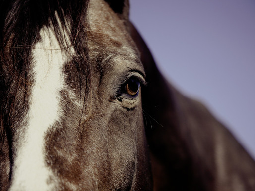 TOP 10 DO'S & DON'T WHEN DEALING WITH EQUINE COLIC
