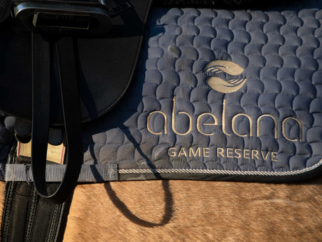 LIVING THE DREAM: Abelana Game Reserve's Horse Safari Guide