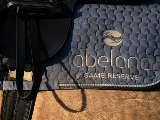 LIVING THE DREAM: Abelana Game Reserve's Horse Safari Guide