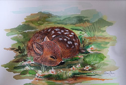 Sweet baby fawn