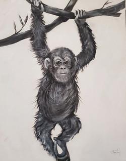 The Inquisitive spirit of the Chimp