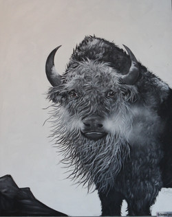 The determined spitrit of the Bison