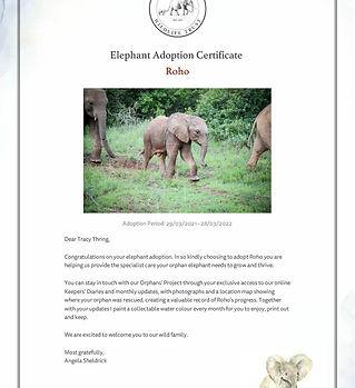 Adoption-AYJEHHFG91024_1 ROHO.jpg