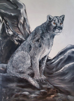 The Cunning spirit of the cougar