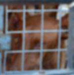 cruelty-to-animals-2732649_1920.jpg