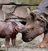 rhino-2196315_1920.jpg