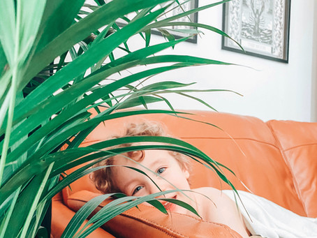 The Obsession With Houseplants And Why It Should Stay