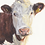 Thumbnail: Hereford Cow Print