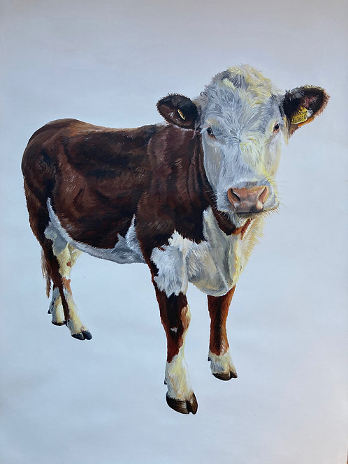Original Hereford Cow Painting