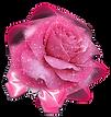 pink rose 4eb487d259ec80e40be1c917b407051c_edited.png