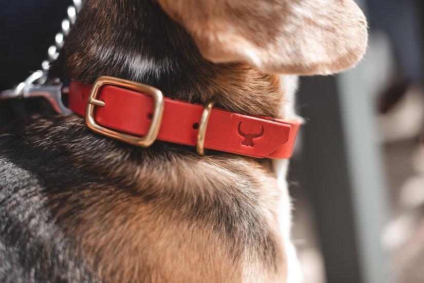 Dog Collar - Plain