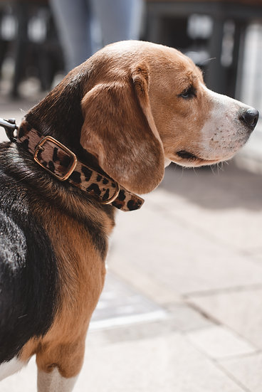 Dog Collar - Animal Print