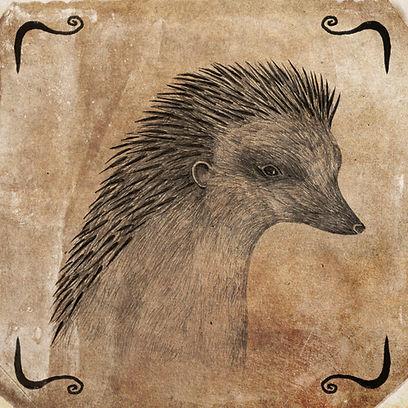ZRI Hedgehog copy3.jpg