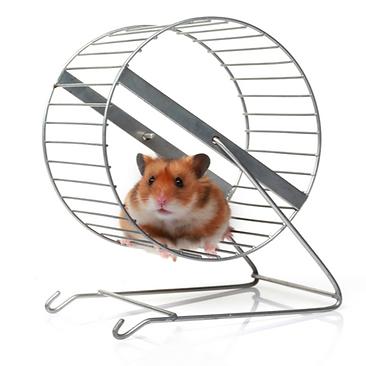 Hamster wheel.png