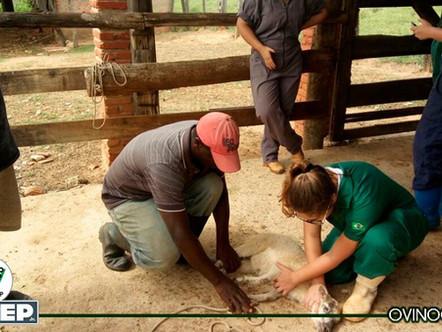 Projeto em ovinocultura