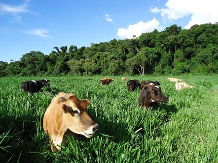 Conversão de uma fazenda leiteira tradicional em orgânica