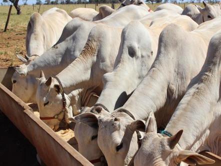Macrominerais na produção animal