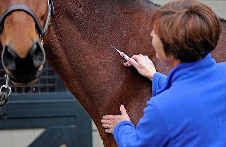Vacinação em Equinos: entenda a importância e as recomendações a serem seguidas