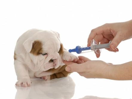 Diabetes Mellitus Canina