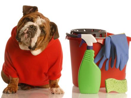 Como a limpeza de sua casa pode afetar a saúde do seu animal de estimação