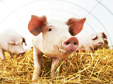 Nutrição animal: Qual verdadeiro impacto na minha produção?