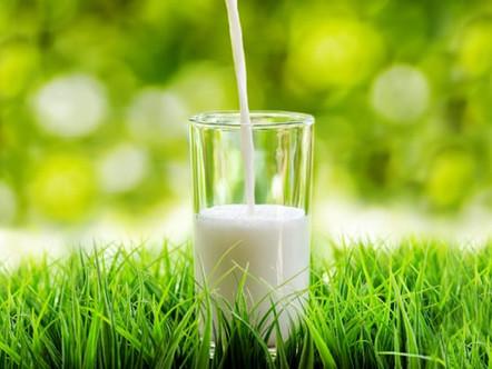 Leite orgânico: o que é e por que produzir