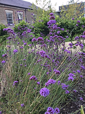 Garden with lavender.png
